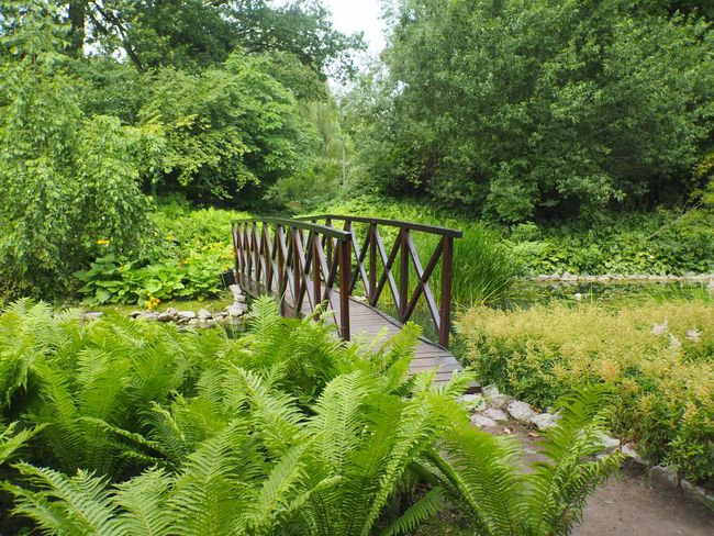 Botanical Garden of Jagiellonian University Olympus Beauty In Nature Botanical Garden Bridge Bridge - Man Made Structure Connection Day Foliage Footbridge Forest Green Color Growth Krakow Land Lush Foliage Nature No People Non-urban Scene Outdoors Park Plant Tranquil Scene Tranquility Tree Wood - Material