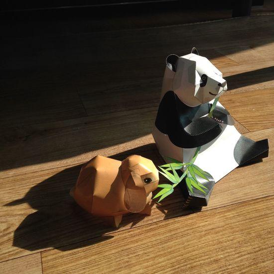 판다와 토끼의 따뜻한 하루 Animal Rabbit Panda Bamboo 토끼 판다 대나무 Jeongseon, Korea