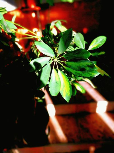 Leaf Nature Close-up Plant Beauty In Nature Growth Sunlight Sundown EyeEmNewHere