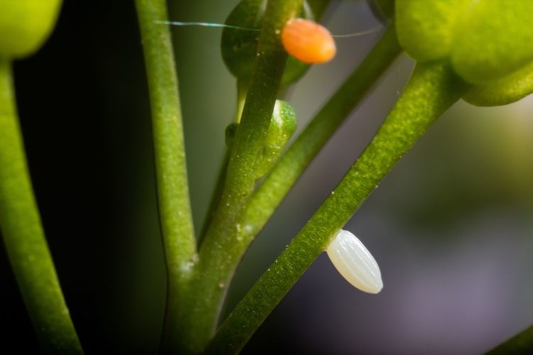 Orange and white egg... Wildlife & Nature Nature Photography Garden Animal Themes Macro Insects Macro Offspring Reproduction Cardamine Pratensis Anthocharis Cardamines Beginnings Eggs Egg Green Color Growth Close-up Plant Freshness Nature Plant Part Beauty In Nature Outdoors
