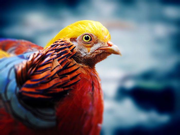 Wildlife Golden Pleasant Chicken Tadda Community EyeEm Nature Lover