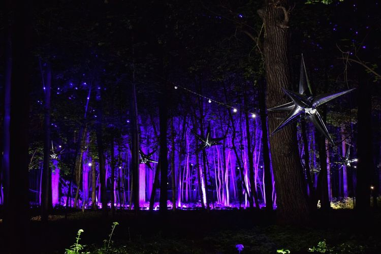 ✨ Inspiration Art Festival ✨ Hanging Night Celebration No People Illuminated Tree Outdoors Neon Life Park Lights Trees Light In The Darkness Night Photography Night Lights Nightphotography Art Event Nature Art Is Everywhere Arts Culture And Entertainment Enchanted Forest Trees And Nature Bright Light Effect