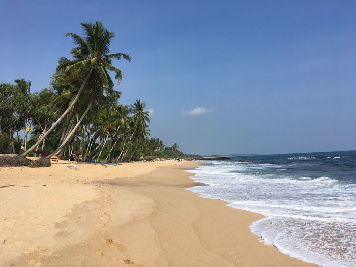 Mirissabeach Mirissa Sri Lanka Ocean Land Sea Water Tree Sky Palm Tree No People Clear Sky Beauty In Nature Nature
