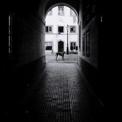 Creative Light And Shadow EyeEm Best Shots EyeEmBestPics EyeEm Best Shots - Black + White Streetphotography