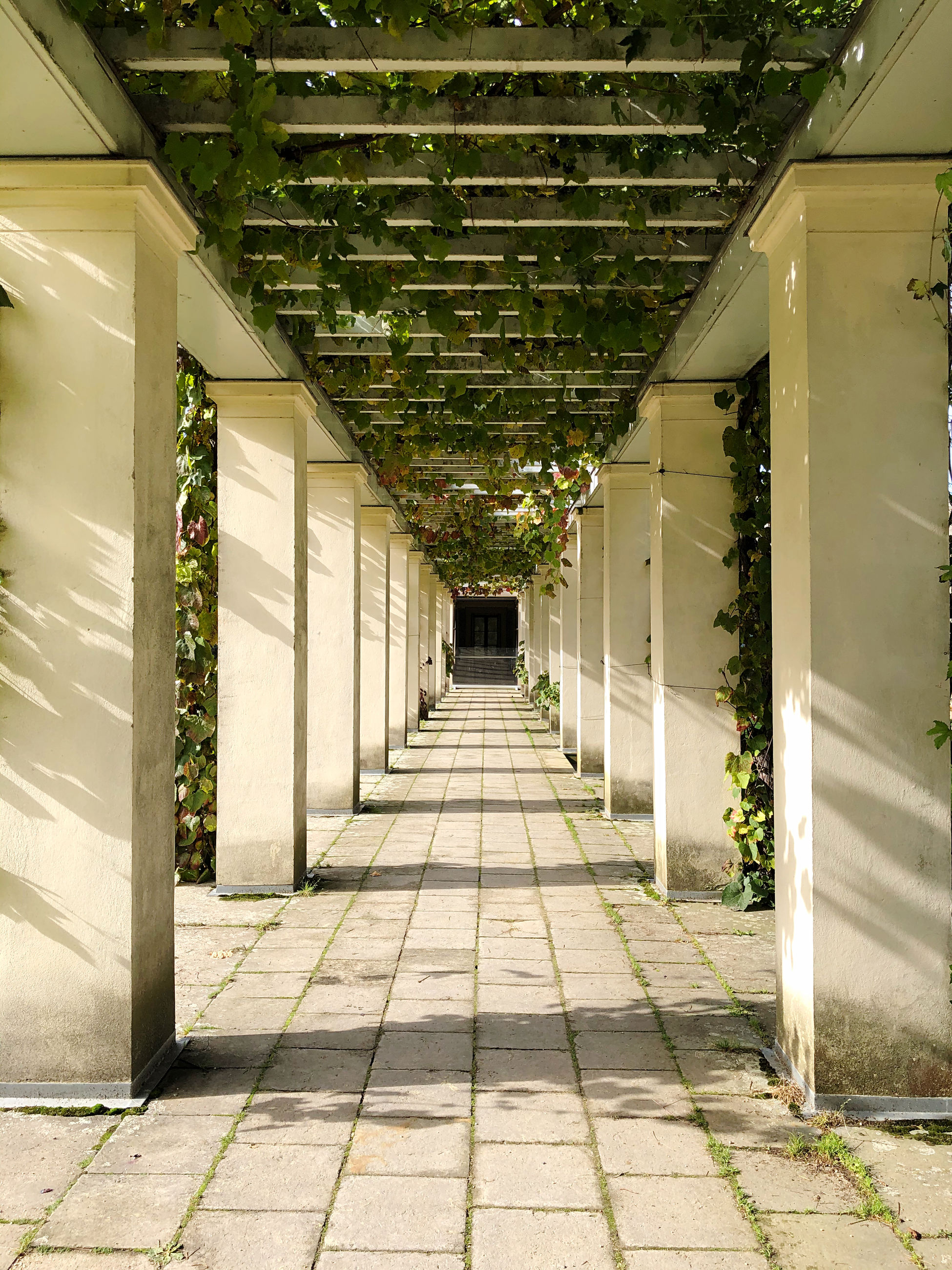 architecture, direction, the way forward, built structure, no people, building, day, arcade, corridor, architectural column, diminishing perspective, footpath, plant, empty, outdoors, flooring, entrance, sunlight, nature, ceiling, colonnade, tiled floor