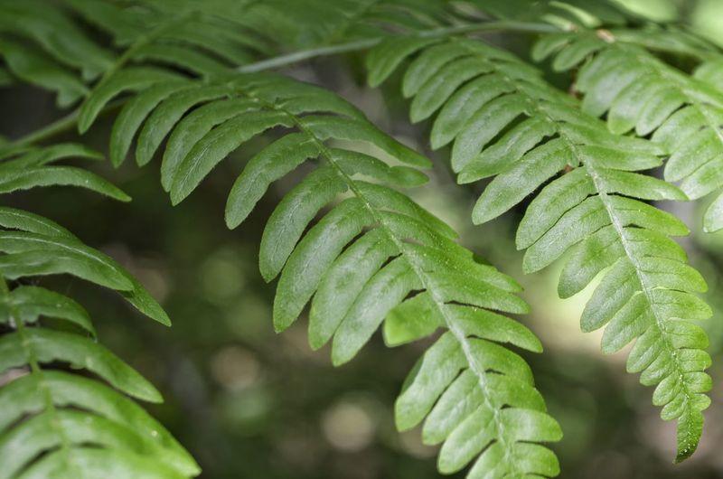 Leaf Close-up Green Color Food And Drink Plant Leaf Vegetable Natural Pattern