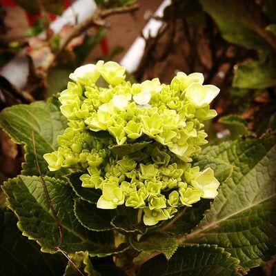 Travel Flower Flowers Ontheroad Ooty Cunnoor Beautiful Loveit Takeapicture