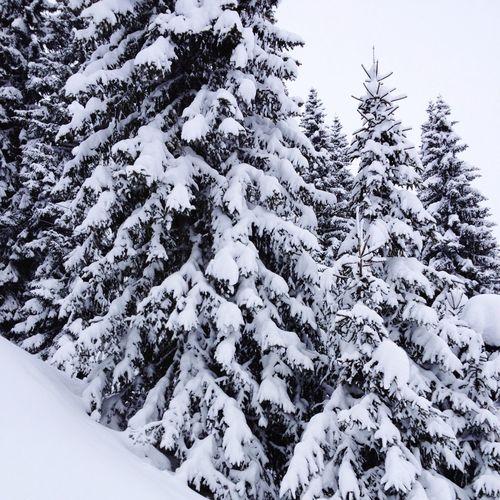 After a snow storm IPS2015Trees Mobilephotography Iphonephotography Iphoneonly IPhoneography Dolomites, Italy Dolomiti Altabadia Corvara