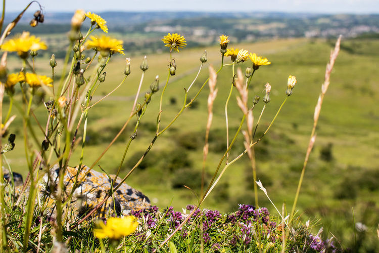 Flowers blooming on hill