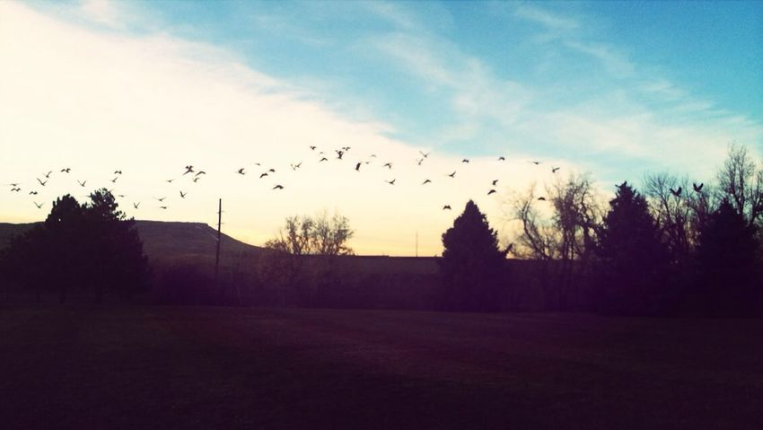 Got Geese? ? Check This Out Hello World Nature Beautiful Sky Animals