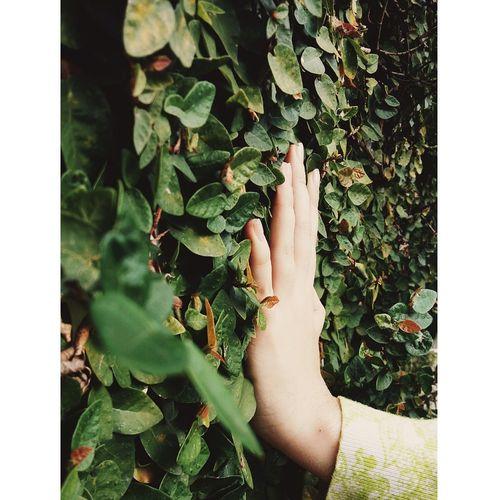 Botany Freshness Human Finger EyeEmBrasil Nature Hanging Out Cotidiano Flowers Enjoy Life Naturediversity