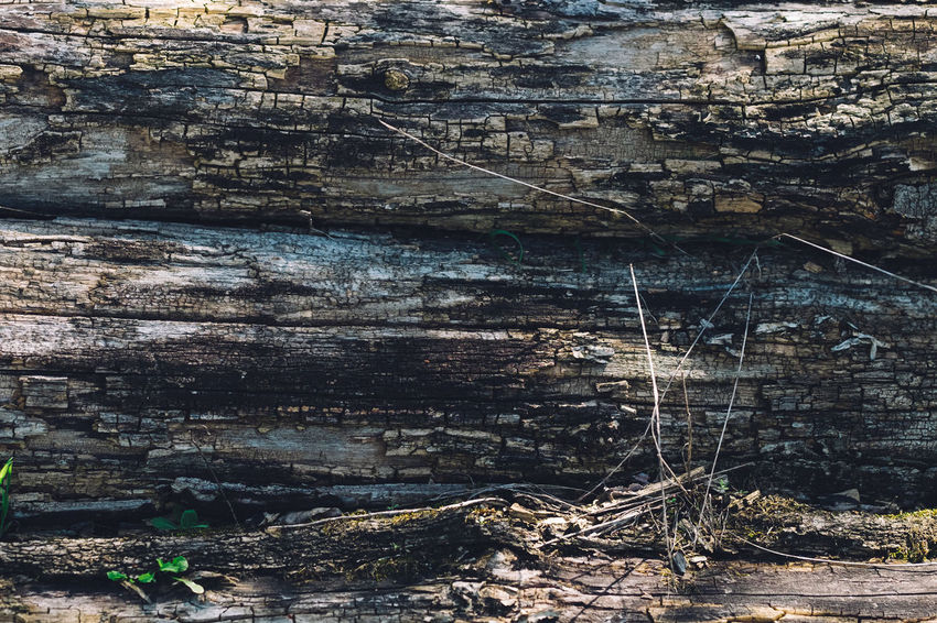Backgrounds Close-up Day Full Frame Nature No People Outdoors Pattern Plant Rock Rock - Object Rock Formation Solid Textured  Tranquility Tree Wood - Material