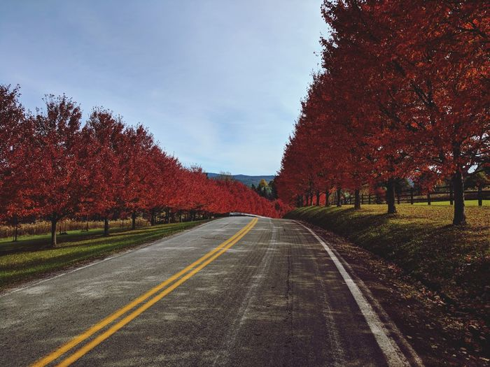 Beautiful Fall Drive in the mountains of Southwestern Pennsylvania (Ohiopyle) Road Astrology Sign Tree Straight Sky Double Yellow Line Fall Mountain Road Asphalt Country Road Empty Road Winding Road Treelined