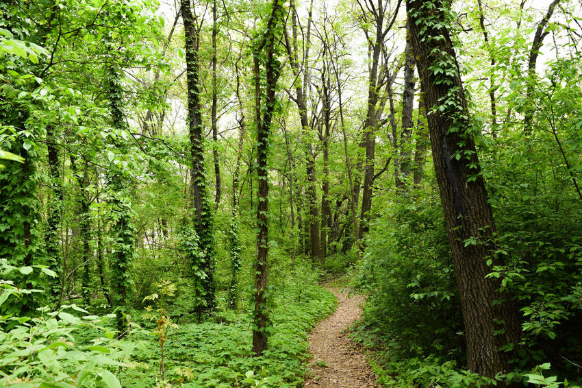 Washington Park Green Nature Hiking Trees Adventure Explore Color Hike Pathway Path Washington Park Springfield Illinois