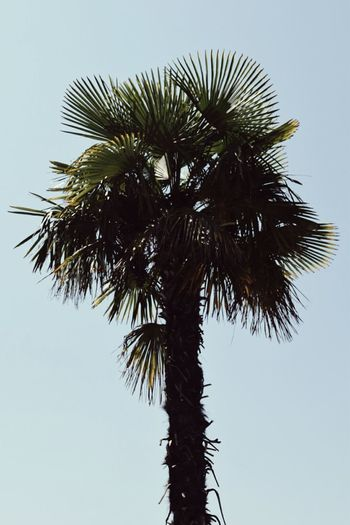 Palm Tree Croatia Summer Pastel Blue Green Silhouette