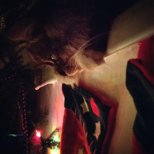 Когда ты ложишься спать, на твоем подоконнике грустит Котик . Wigandt_photo Wigandtphoto Wigandt Sonyalpha Minolta Russia Россия Анапа Anapa котыкошки Mypetinblog