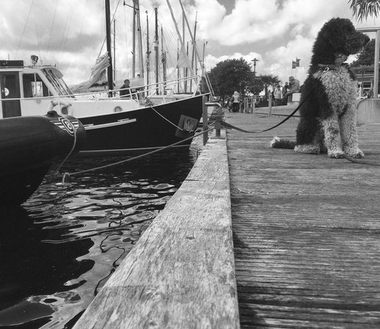 Outdoors Water No People Dog Dogs Dogs Of EyeEm Dogslife Dog Portrait Dog Photography Dogs Life Pet Pets Pet Photography  Pets Of Eyeem Pet Life  Harbour Harbour Life Harbour View Sky Cloud - Sky Transportation