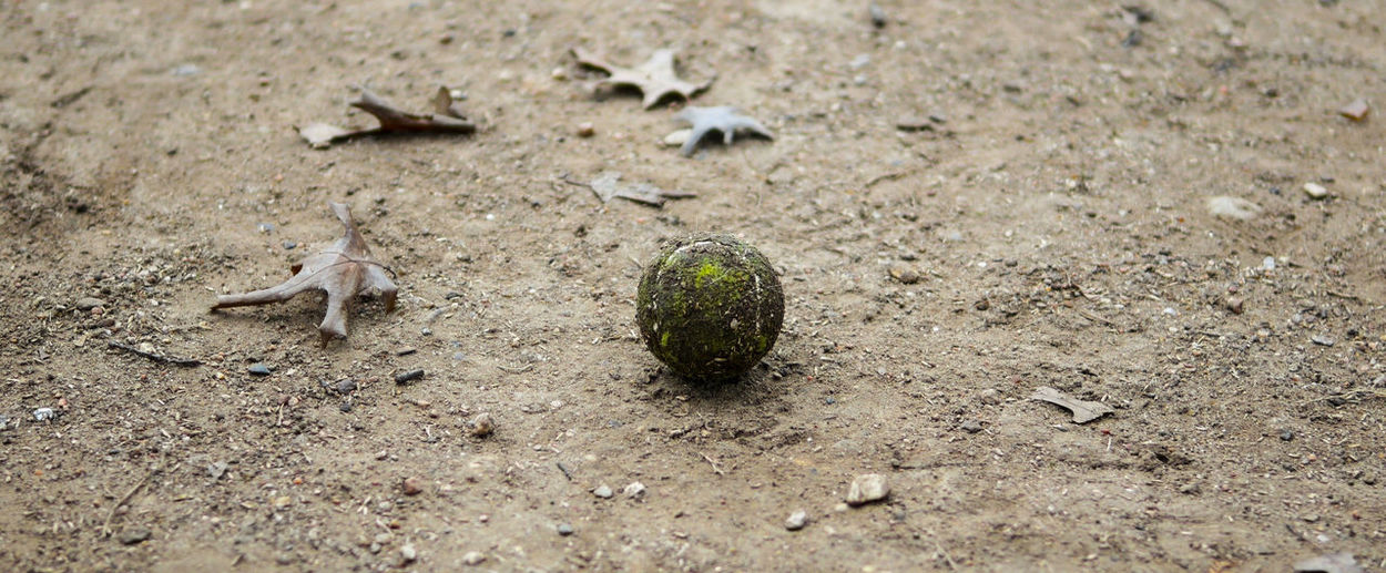 Photo of a dirty green tennis ball on the ground with fall leaves around it. Tennis Ball Ball Close-up Day Dirt Dirty Fetch Field Focus On Foreground Ground Level View High Angle View Land Nature No People Outdoors Play Small Torn Up