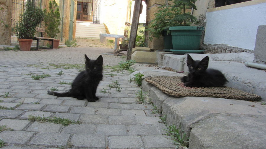 Cyprus Cyprus Cat Nikosia Animal Themes Architecture Building Exterior Built Structure Cat Day Domestic Animals Domestic Cat Feline House Looking At Camera Mammal No People One Animal Outdoors Pets Portrait Sitting Steps Whisker
