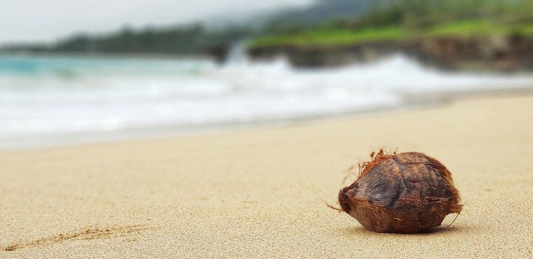 Crab Coconut