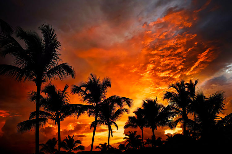 Low angle view of silhouette palm trees against dramatic sky