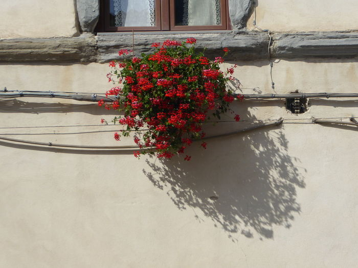 Flowers and shadow Flower Red Reflection Architecture Close-up Building Exterior