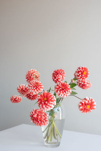Close-up of red flower vase against white background