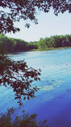 Tree Water Clear Sky Lake Reflection Underwater Blue Floating On Water Sky Landscape