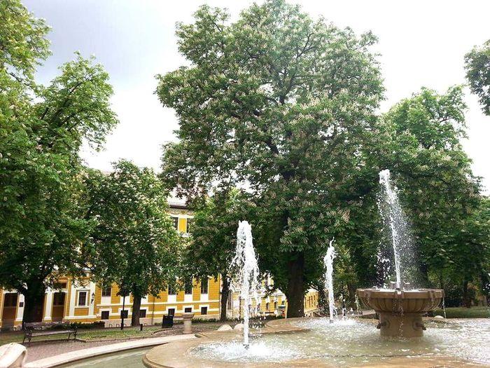 Neighborhood Map Pecs, Hungary Fountain Outdoors Trees Blooming