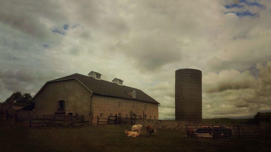 The barn at