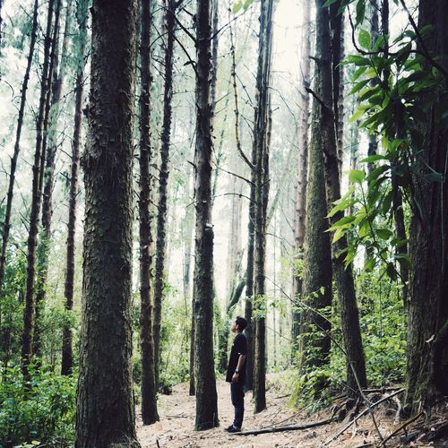 Landscape Nature Vscocam VSCO Portrait Wood Trees