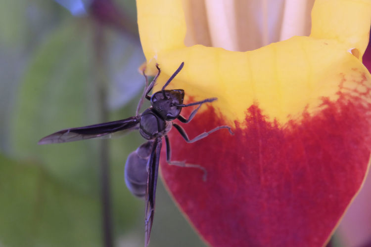 Close-up of paper wasp on flower