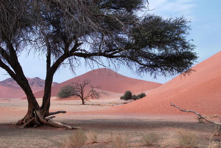 Bare tree on desert against sky