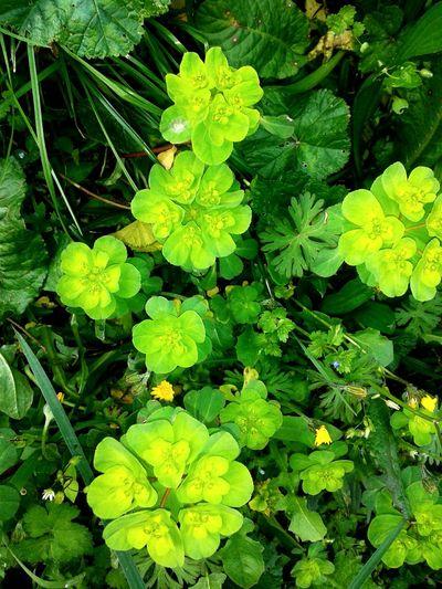Flowers Green Eyemphotography Eyemnaturelover Beautiful Nature Follow Follow Follow