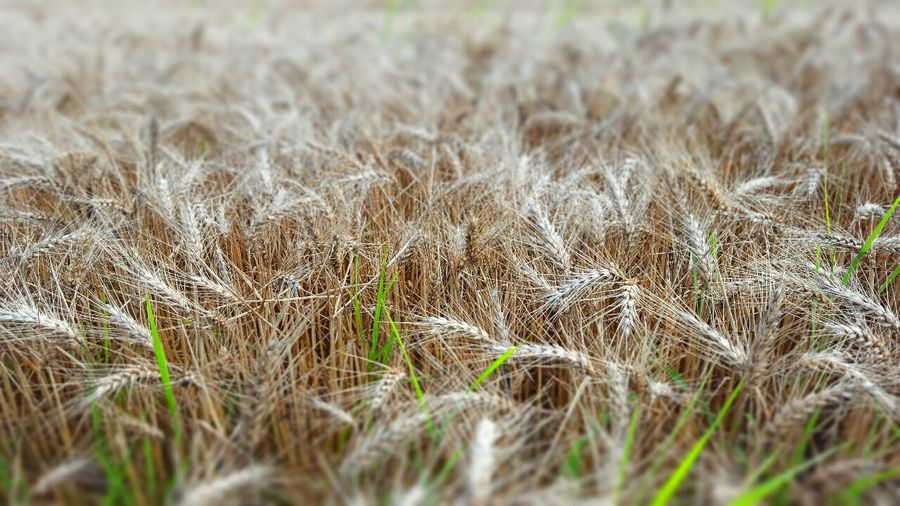 Field Check This Out tiltshift Taking Photos hdr Hidden Gems  nature