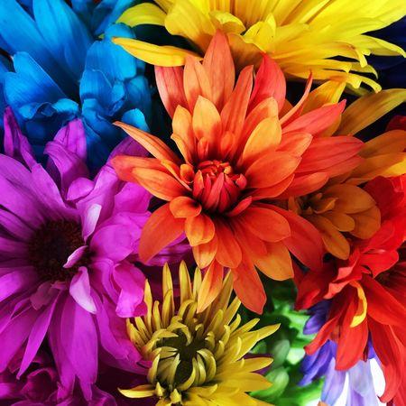 Flores y colores Colores Flores Flowering Plant Flower Vulnerability  Fragility Petal Beauty In Nature Plant