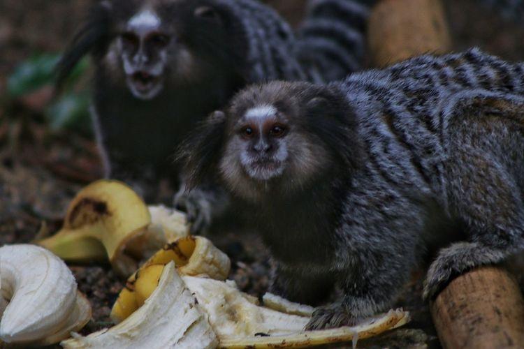 The monkeys