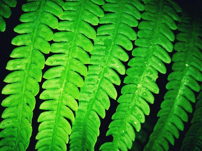 Garden Green Green And Black Nature Textures