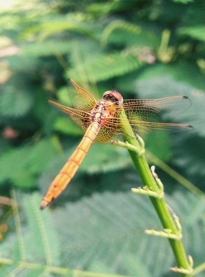 dragon fly Insect Animals In The Wild One Animal Animal Wildlife Nature Animal Themes Green Color First Eyeem Photo