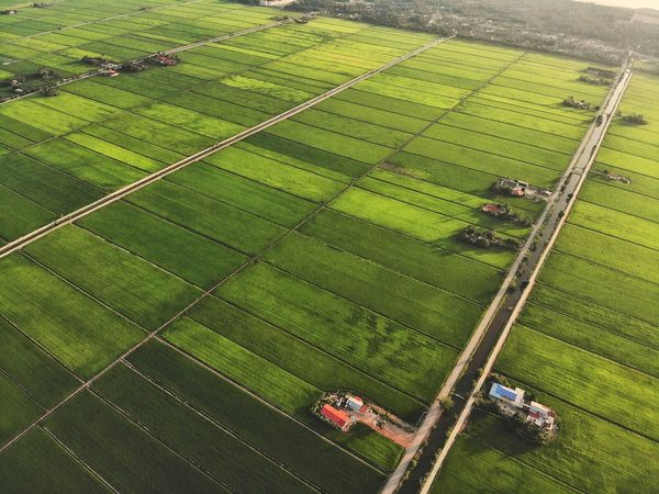 Aerial view of paddy field Sunset Sunlight Beautiful Nature Landscape Aerial View Aerial Shot Aerial Photography EyeEm Nature Lover EyeEm Selects Getty Images EyeEm Best Shots Beauty In Nature Malaysia Outdoor Rice Paddy Rural Scene Irrigation Equipment Working Agriculture Cereal Plant Field High Angle View Crop  Farm Terraced Field Agricultural Field Rice - Cereal Plant Plantation Farmland