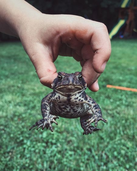 Cropped image of man holding toad against grassy field