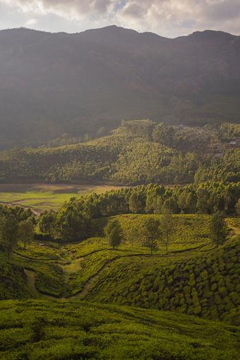 A tribal village near Munnar Land Beauty In Nature Landscape Rural Scene Village Teaplantation Agriculture Tribal