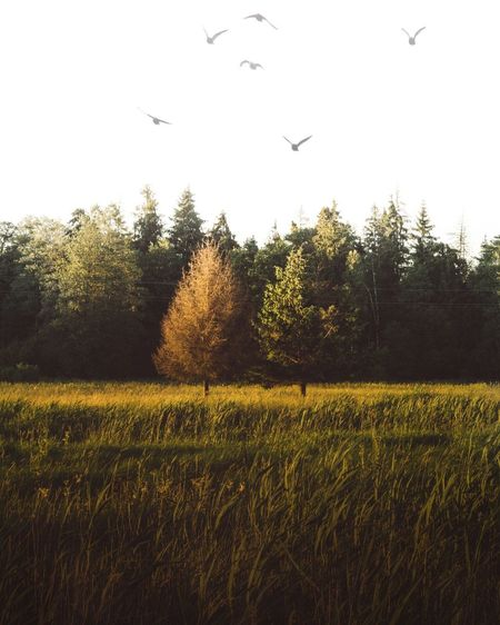 Flying Bird Tree Nature Animal Themes Animals In The Wild No People Growth Flock Of Birds Field Mid-air Tranquil Scene Outdoors Beauty In Nature Large Group Of Animals Tranquility Grass Landscape Animal Wildlife Scenics