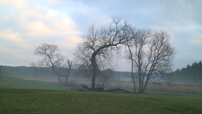 Mist Hazy  Sky Plant Cloud - Sky Tree Beauty In Nature Nature Field