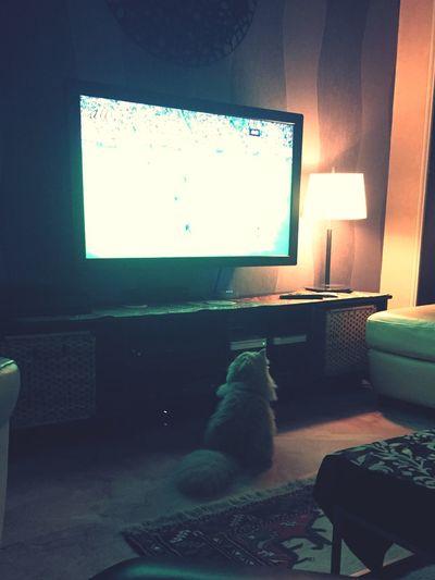 Persiancat My Pet Football FC Bayern he is a Porto fan, idiot