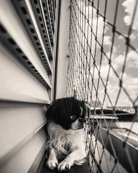 Morning! Pets Dog Domestic Animals People Day First Eyeem Photo