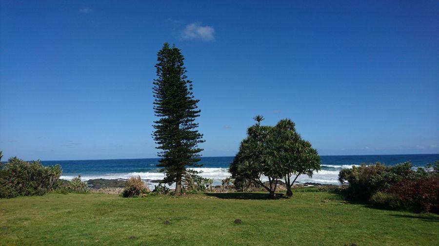 Sea Beach Tree