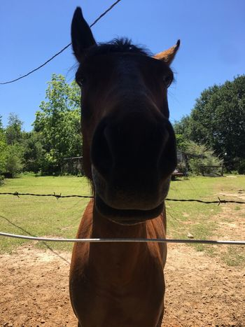 No Filter, No Edit, Just Photography Just Horsing Around Cheesin So Much Love Close-up