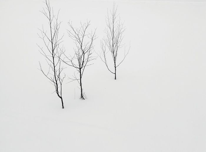 Day 269 - Iced Lake Helsinki Blackandwhite Lake Ice Snow Tree 365project 365florianmski Day269