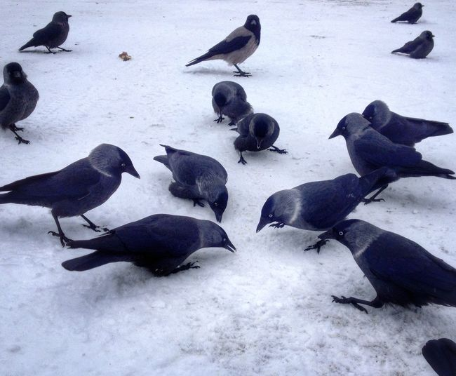 """ Happy To Be Among Them  ""...;) EyeEm Birds ... Winter Trip To Finland"